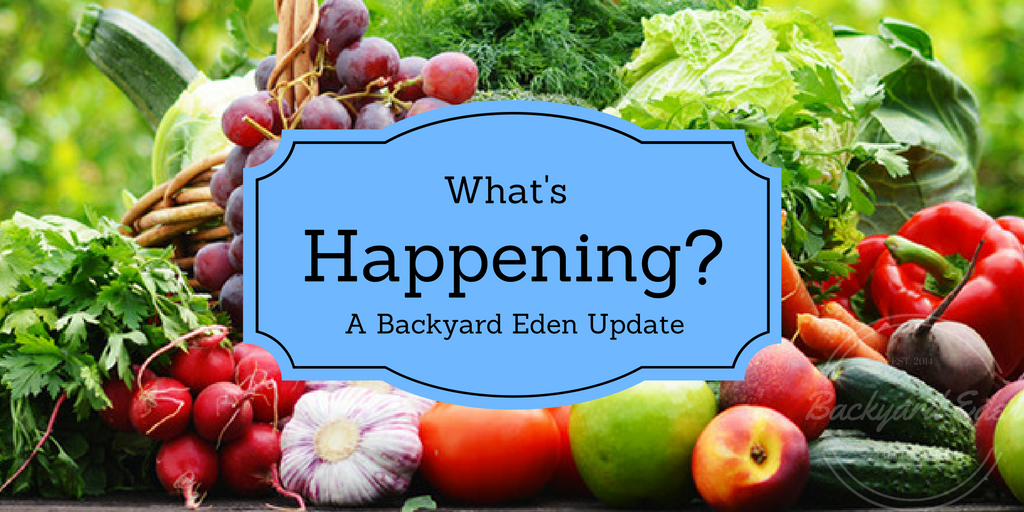 What's happening,Backyard Eden Update, Update, Backyard Eden, www.backyard-eden.com