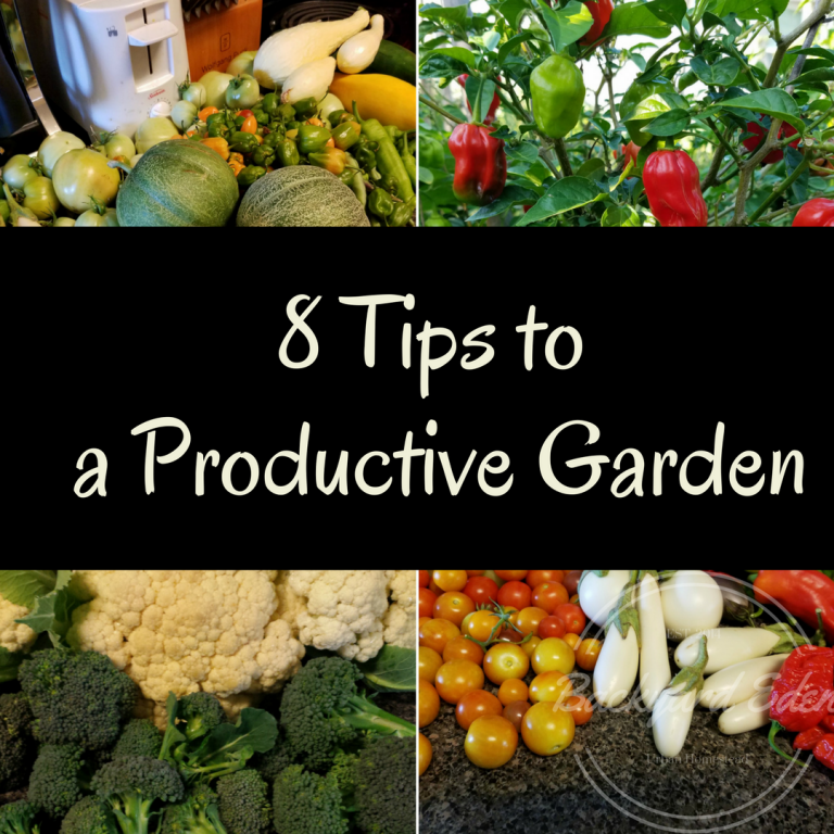 8 Tips to a productive garden, how to have a productive garden, Backyard Eden, www.backyard-eden.com