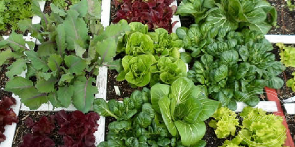 Square Foot Gardening, How to start square foot gardening, Backyard Eden, www.backyard-eden.com