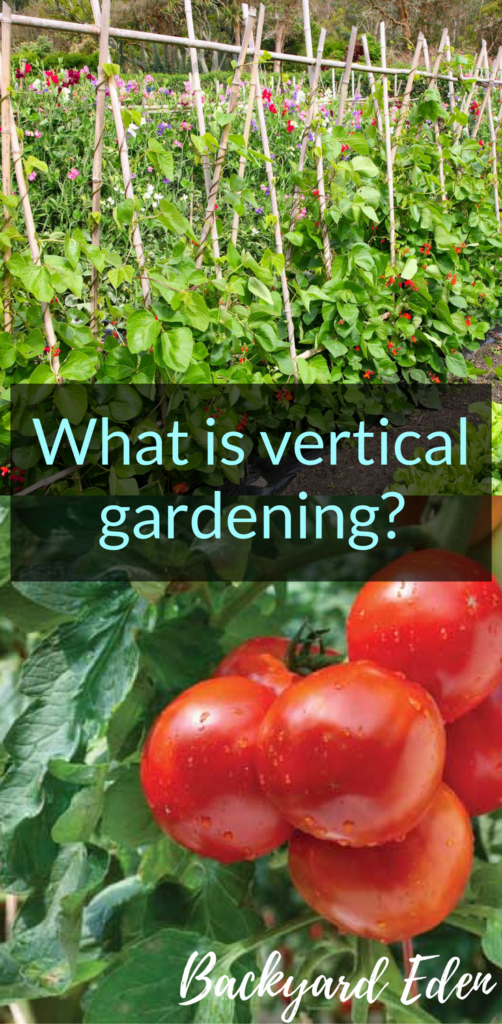 What is vertical gardening, vertical gardening, Backyard Eden, www.backyard-eden.com