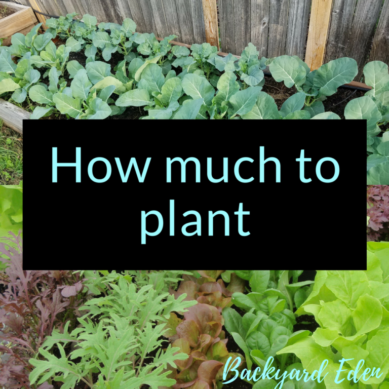 How much to plant, how much to plant in your garden, Backyard Eden, www.backyard-eden.com, www.backyard-eden.com/how-much-to-plant