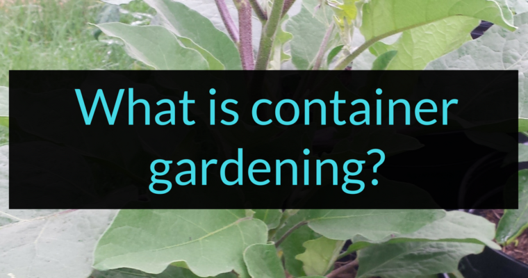 What is container gardening, container gardening, Backyard Eden, www.backyard-eden.com