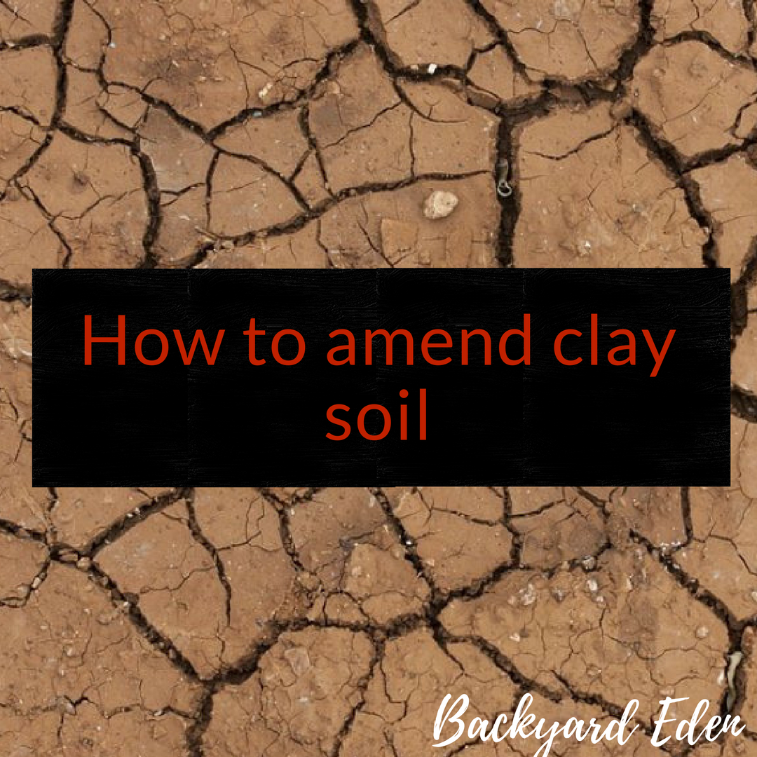 How To Amend Clay Soil Backyard Eden