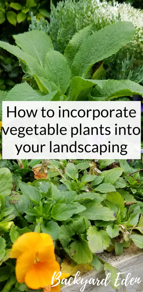 How to incorporate vegetable plants into your landscaping, landscaping with vegetables, Backyard Eden, www.backyard-eden.com, www.backyard-eden.com/how-to-incorporate-vegetable-plants-into-your-landscaping
