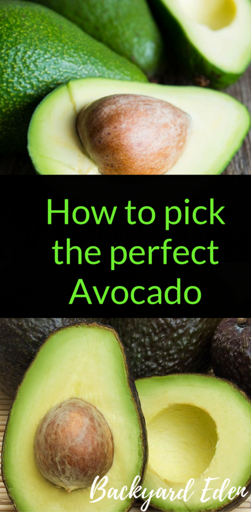 How to pick the perfect avocado, avocados, Backyard Eden, www.backyard-eden.com, www.backyard-eden.com/pick-perfect-avocado