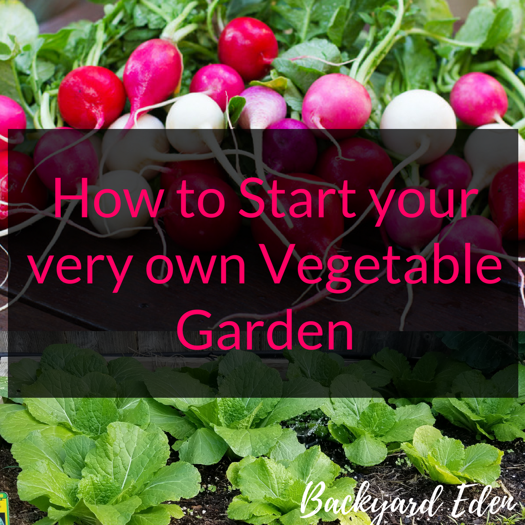 Creating Our First Vegetable Garden Advice Please: How To Start Your Very Own Vegetable Garden