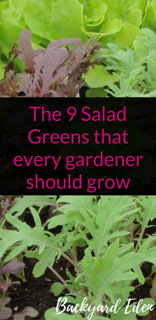 The 9 Salad Greens that every gardener should grow, Salad Greens, Backyard Eden, www.backyard-eden.com