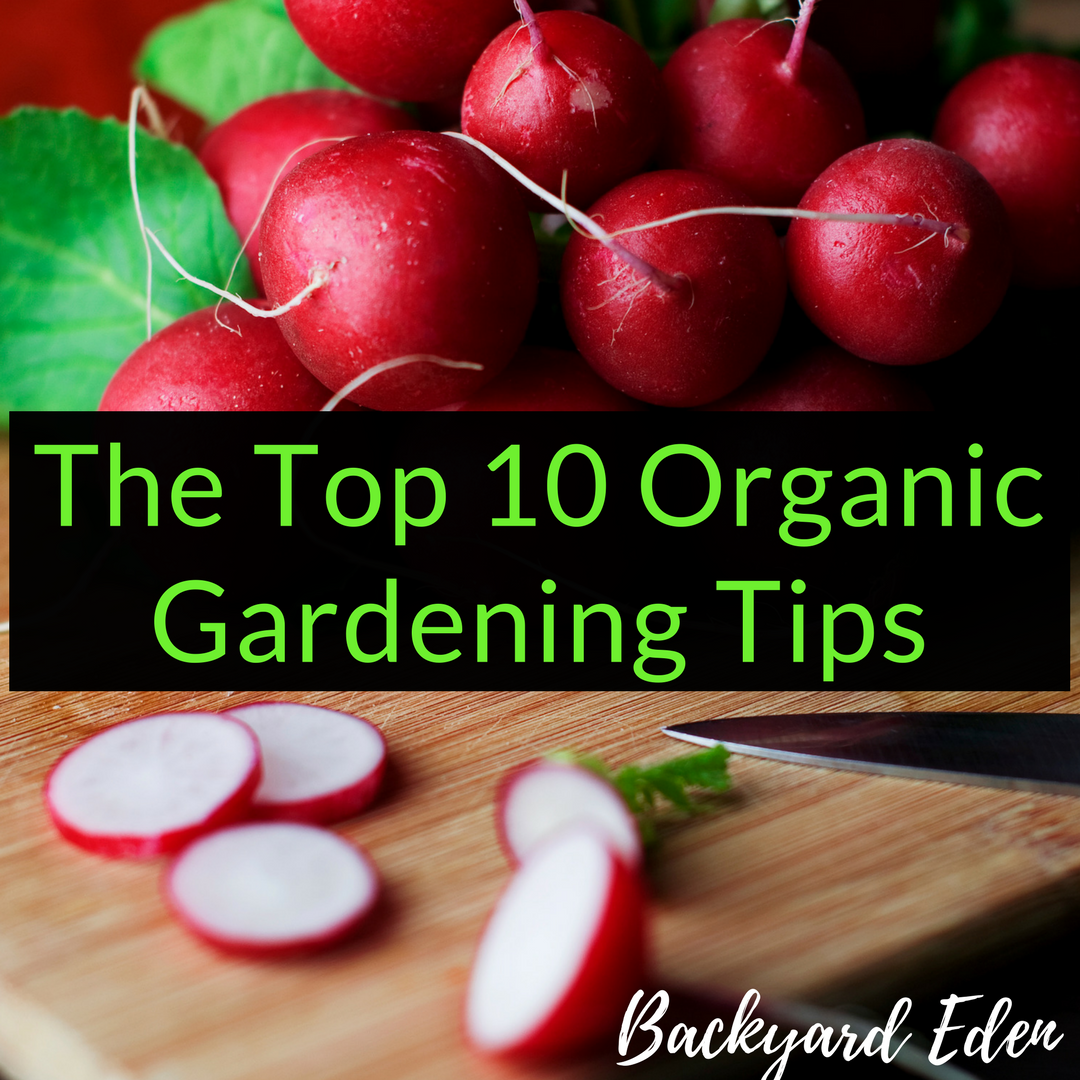 The Top 10 Organic Gardening Tips Backyard Eden