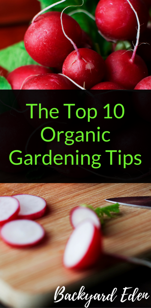 The Top 10 Organic Gardening Tips, Organic Gardening Tips, Backyard Eden, www.backyard-eden.com