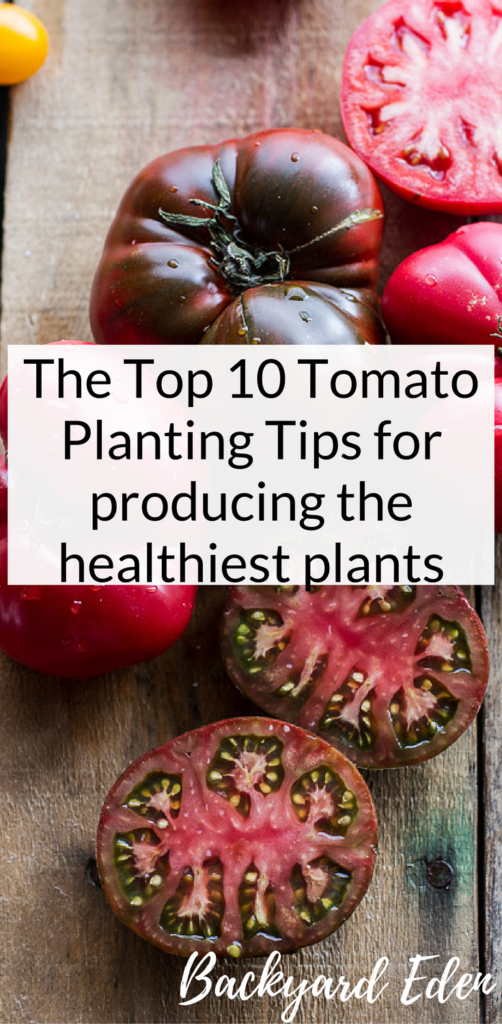 The Top 10 Tomato Planting Tips for producing the healthiest plants, tomato tips, Backyard Eden, www.backyard-eden.com, www.backyard-eden.com/top-10-tomato-planting-tips-for-producing-the-healthiest-plants