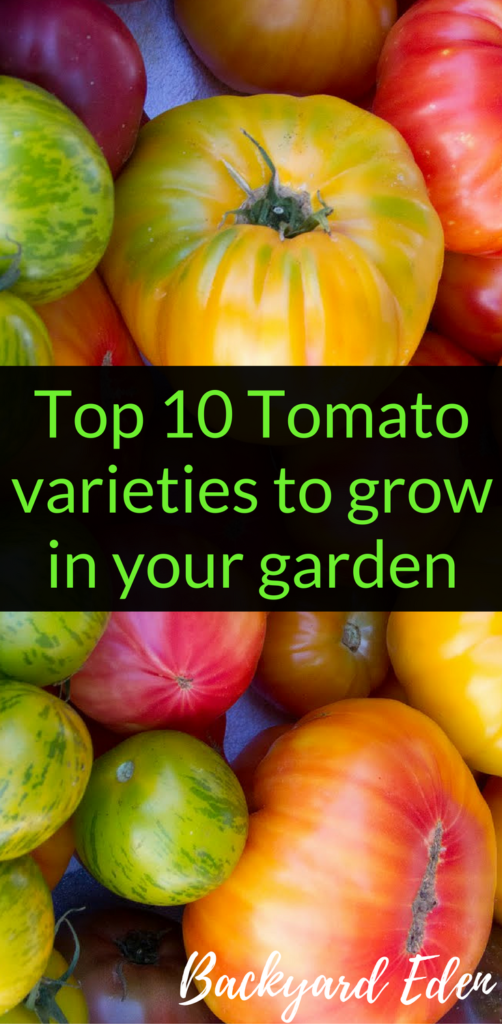 Top 10 tomato varieties to grow in your garden, best tomatoes to grow, tomatoes, Backyard Eden, www.backyard-eden.com/top-10-tomato-varieties-to-grow-in-your-garden
