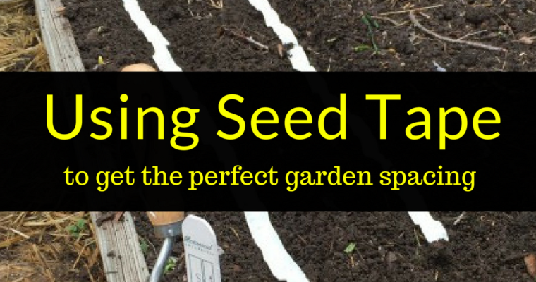 Using seed tape to get the perfect garden spacing, seed tape, using seed tape, Backyard Eden, www.backyard-eden.com, www.backyard-eden.com/using-seed-tape-to-get-the-perfect-garden-spacing