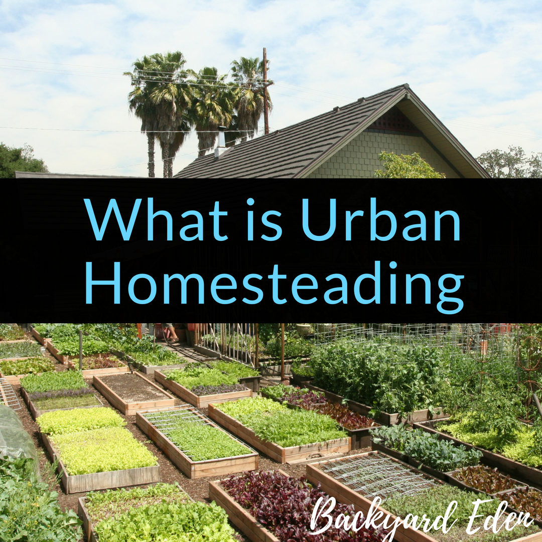 Homestead Gardens Landscaping: What Is Urban Homesteading
