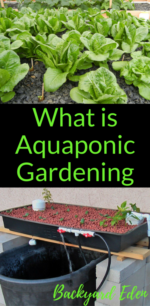 What is Aquaponic Gardening, Aquaponics, Backyard Eden, www.backyard-eden.com, www.backyard-eden.com/what-is-aquaponic-gardening