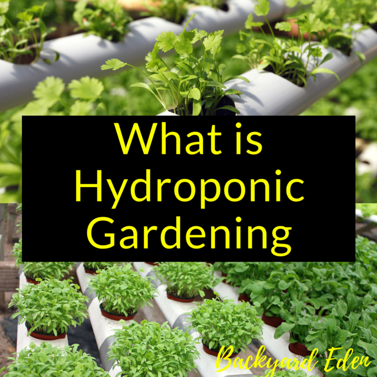 What is hydropnic gardening, hydroponic gardening, Backyard Eden, www.backyard-eden.com, www.backyard-eden.com/what-is-hydroponic-gardening