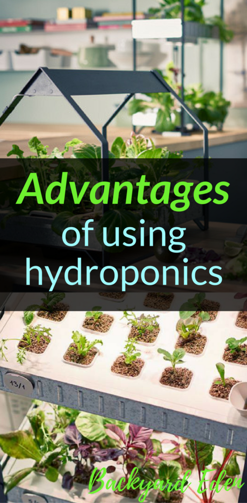 Advantages of using hydroponics, hydroponics, Backyard Eden, www.backyard-eden.com, www.backyard-eden.com/advantages-to-using-hydroponics