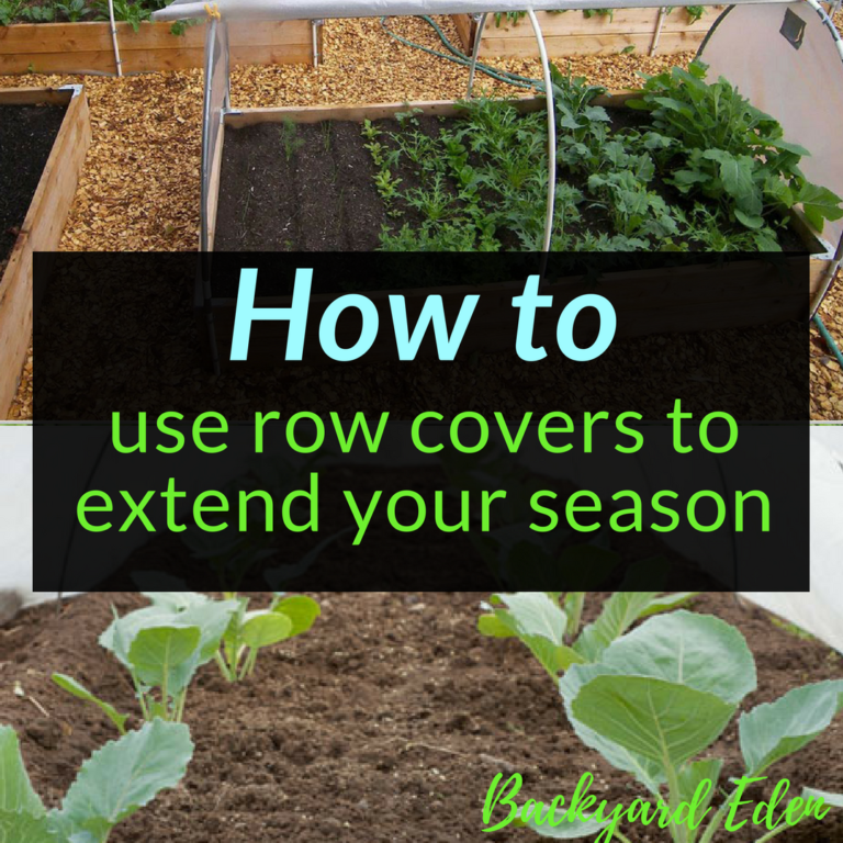 How to use row covers to extend your season, season extension, Backyard Eden, www.backyard-eden.com, www.backyard-eden.com/how-to-use-row-covers-to-extend-your-season