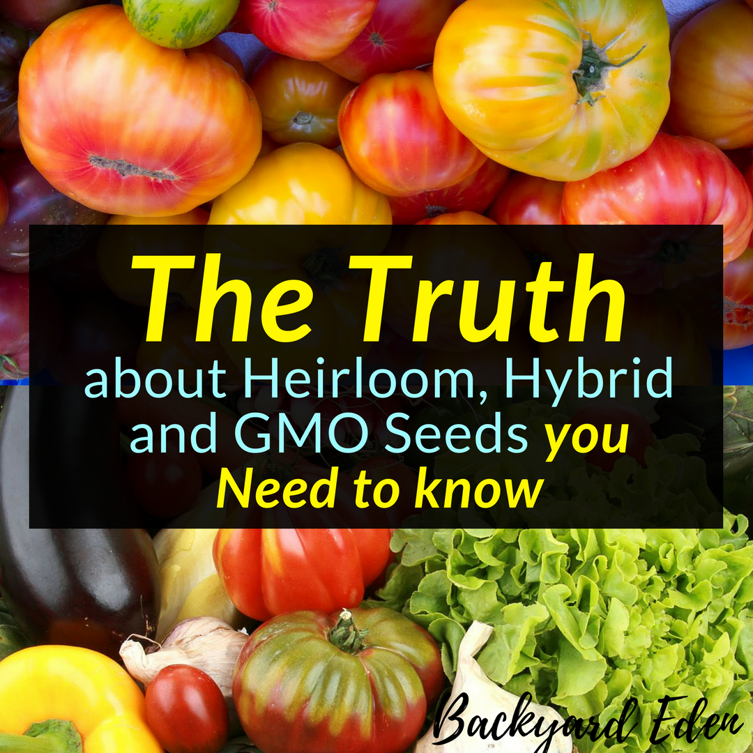 Flipboard How Much Longer Will Foreigners Buy The Growing: Seed Truth: The Truth About Heirloom, Hybrid And GMO Seeds