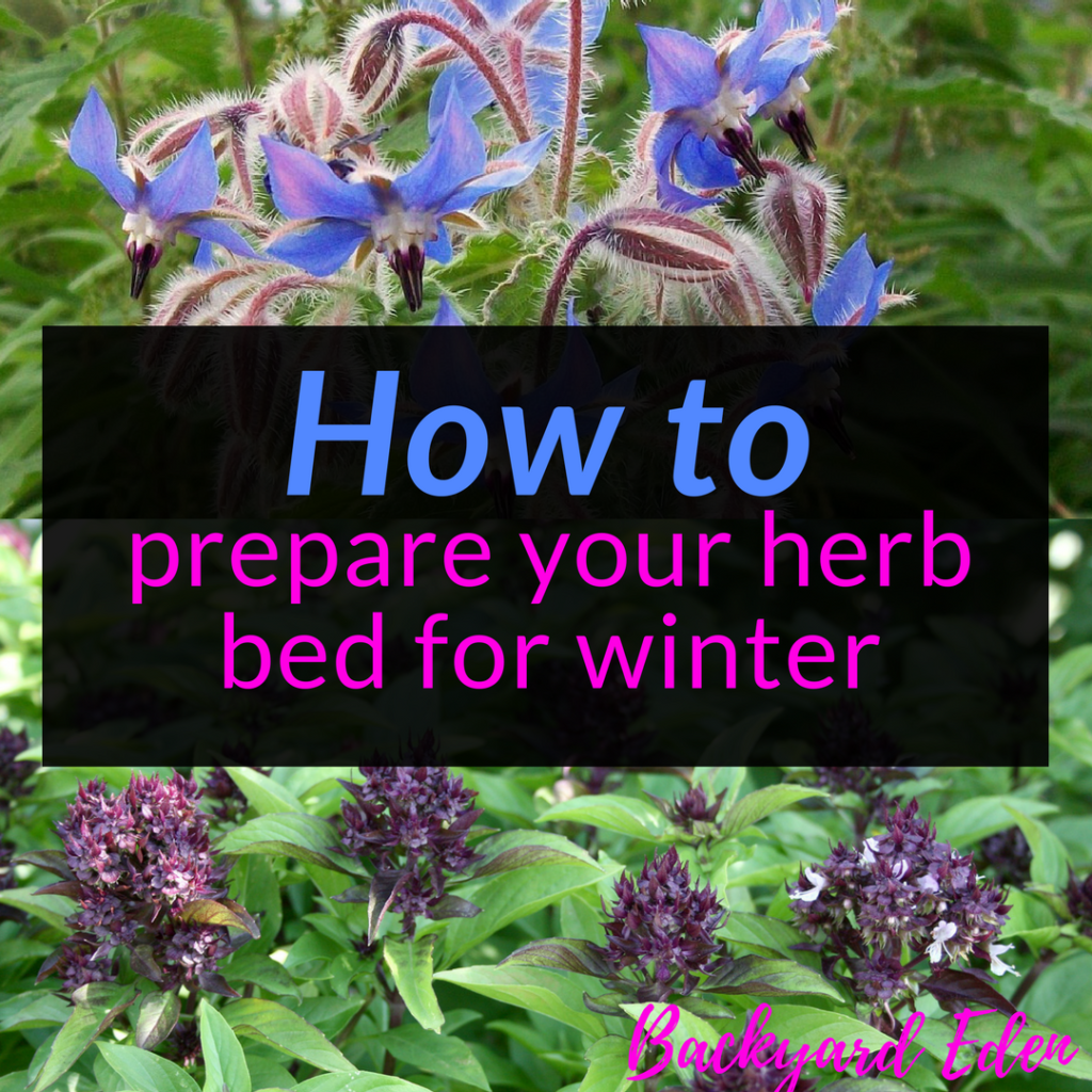 How to prepare your herb bed for winter, herbs, winterizing, Backyard Eden, www.backyard-eden.com, www.backyard-eden.com/how-to-prepare-your-herb-bed-for-winter