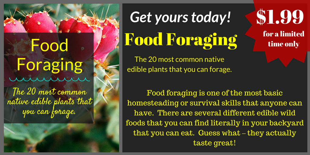 Food Foraging EBook, Backyard Eden, www.backyard-eden.com