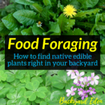 Food Foraging - How to find native edible plants right in your backyard, native edible plants, wild edibles, food foraging, Backyard Eden, www.backyard-eden.com, www.backyard-eden.com/food-foraging-how-to-find-native-edible-plants-right-in-your-backyard