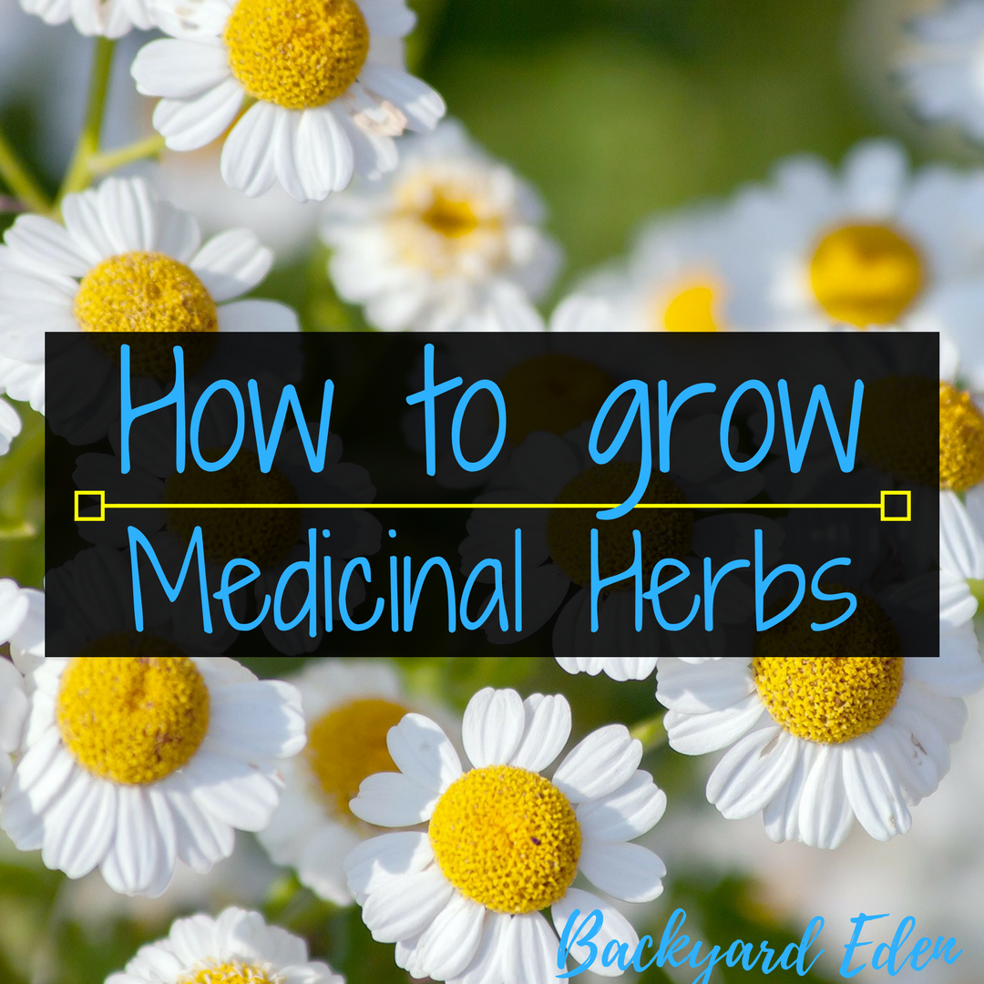 How to grow medicinal herbs, medicinial herbs, herbs, Backyard Eden, www.backyard-eden.com, www.backyard-eden.com/how-to-grow-medicinal-herbs