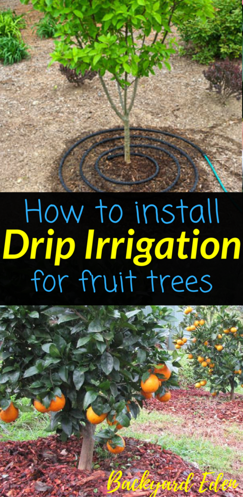 How To Install Drip Irrigation For Fruit Trees Backyard Eden