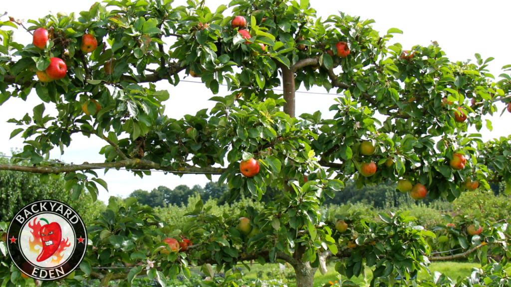 Espalier Fruit Trees The Solution To Your Small Garden Space