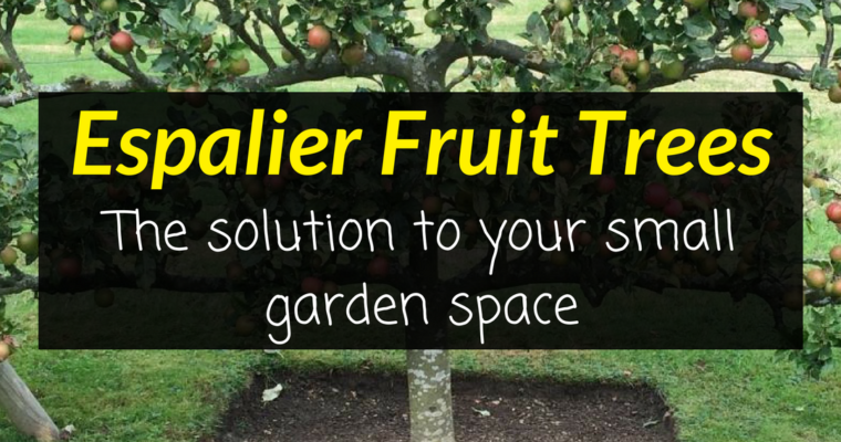 Espalier Fruit Trees  - The solution to your small garden space 1