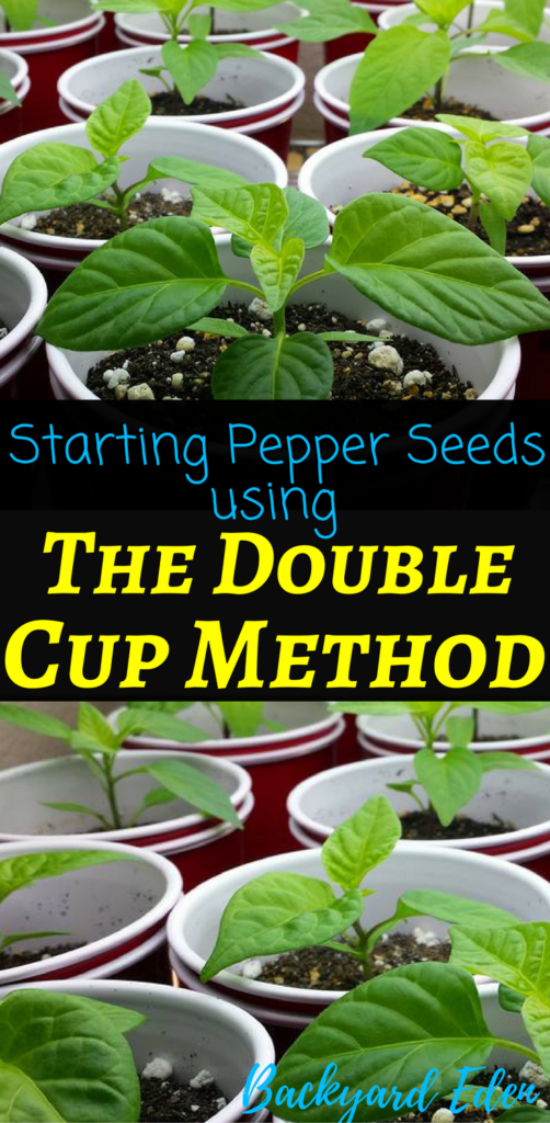Starting Pepper Seeds using the double cup method, starting pepper seeds, starting seeds, growing peppers from seed, Backyard Eden, www.backyard-eden.com, www.backyard-eden.com/how-to-start-pepper-seeds-the-double-cup-method