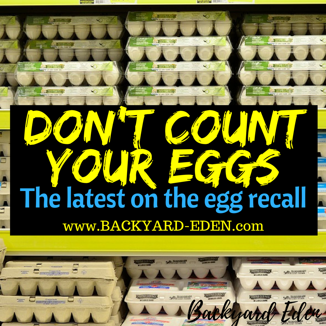 don't count your eggs, the egg recall, Backyard Eden, www.backyard-eden.com, www.backyard-eden.com/don't-count-your-eggs