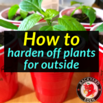 How to harden off plants for outside 1