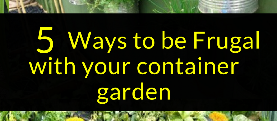 5 Ways to be Frugal with your container garden, Frugal Gardening, Backyard Eden, www.backyard-eden.com, www.backyard-eden.com/5-Ways-to-be-Frugal-with-your-container-garden