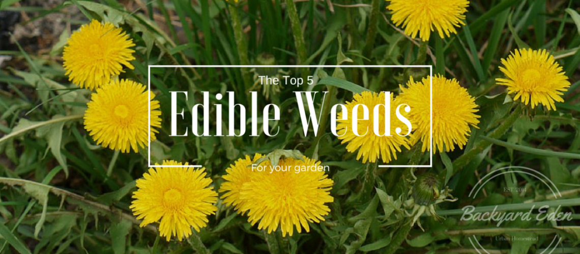 The Top 5 Weeds to grow