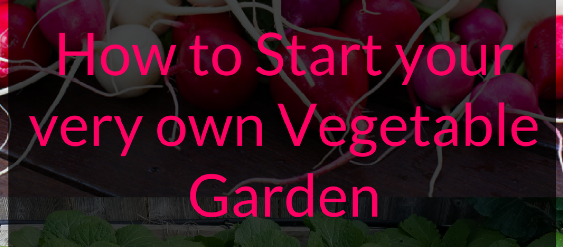 How to start your very own vegetable garden