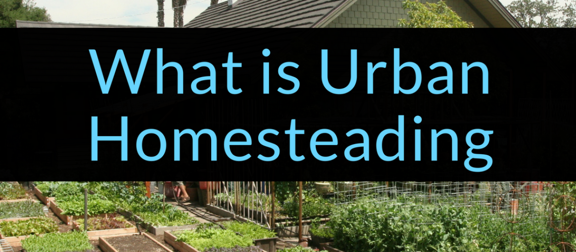 What is Urban Homesteading, urban homesteading, homesteading, Backyard Eden, www.backyard-eden.com, www.backyard-eden.com/what-is-Urban-Homesteading