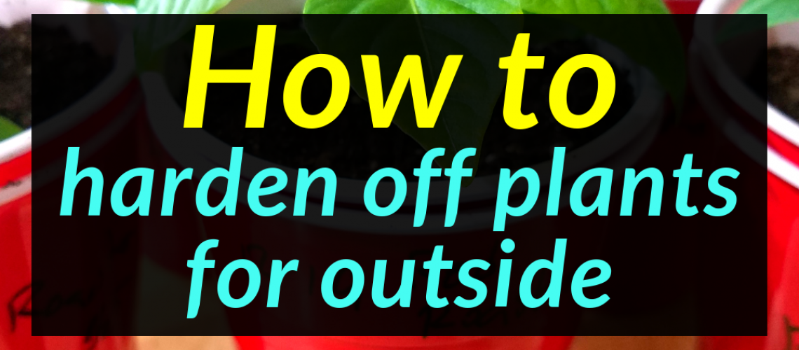 how to harden off plants for outside