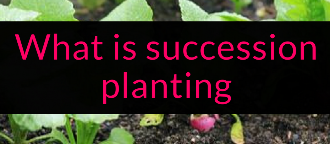 What is succession planting, succession planting, succession cropping, Backyard Eden, www.backyard-eden.com, www.backyard-eden.com/what-is-succession-planting